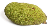 Kathal - Jackfruit, national fruit of Bangladesh